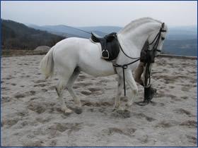 Ujahovanje in šolanje konj